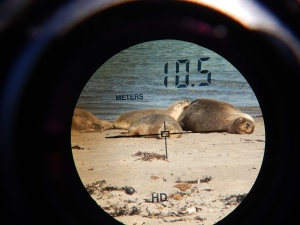 Binoculars and a 300m camera lens are used to watch sea lions from a distance
