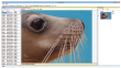 A screen-shot from the software used to build a library of individual sea lions based on their whisker spots